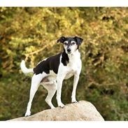 Tegn 100 Hunde -udfordring