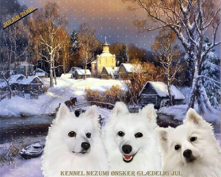 fotoalbum diverse hund julebilleder