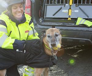 Hunde på job- Med tre svenske sprængstofhunde på arbej...