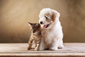 Er du et hunde- eller kattemenneske?