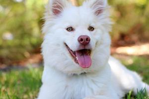 Hvilken kost er god for din hund og hvad tåler den ikk...