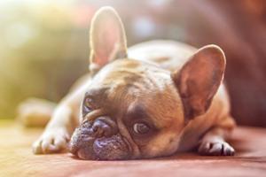 Forkæl din hund med lækre CBD hundekiks