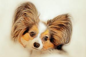 Få råd til det bedste til din hund