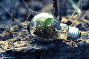 Den private forbruger og grøn omstilling