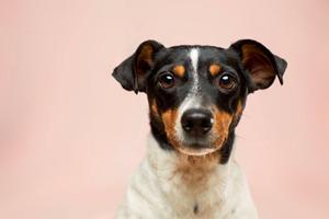 Sådan kommer du bedst i mål med din hundetræning