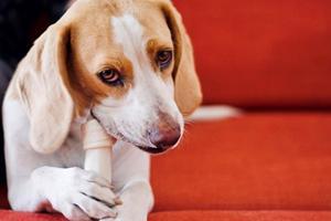 Forkæl din hund med det bedste hundefoder
