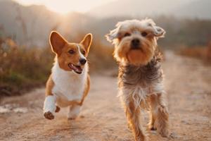 Et bedre hundeliv med CBD olie