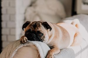 Sådan får du mere tid til din hund i hverdagen