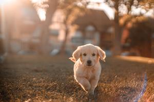 Giv din hund succes på SOME via reklamefilm produktion