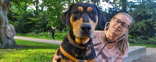 Gadens liv -er et godt hundeliv