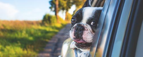 Gør bilturen behagelig for din hund