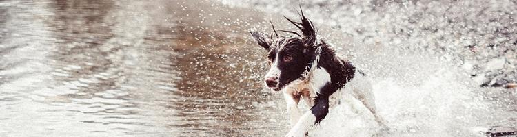 Canosan tabletter hjælper din hund mod ledproblemer
