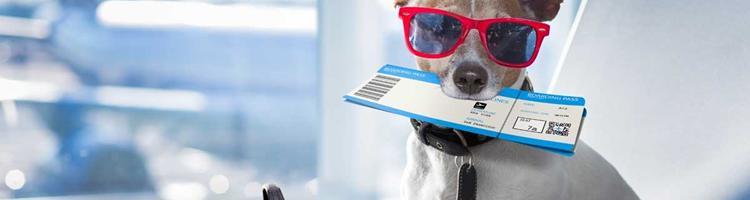 Tag din firbenede ven med på flyrejsen