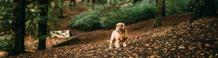 Sælg dine hundehvalpe på en online auktion