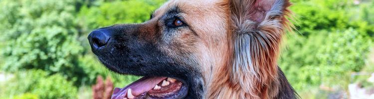 5 råd, der sikrer, at din hund trives i sommervarmen