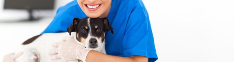 Sådan vælger du den rette hundeforsikring