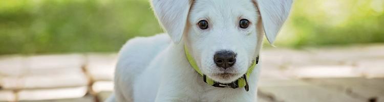 Skab et sikkert hjem for dig og din hund