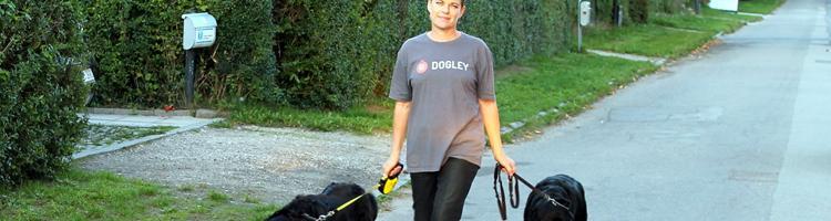 Tryg, privat hundepasning hos Dogley