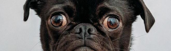 Gør din hund til en synlig del af familie