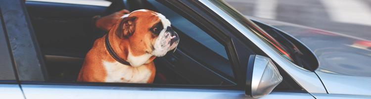 Få plads til hunden i enhver bil