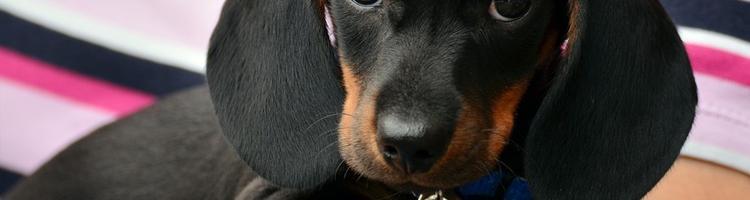 Skab et sundt og lykkeligt miljø for din hund