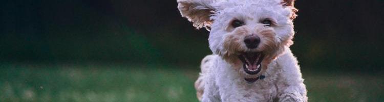 Tre gode råd til at holde din hund sund og rask