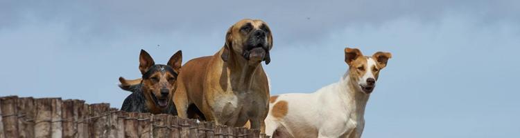Call of Duty's mange hunde - schæferen har mange rolle...