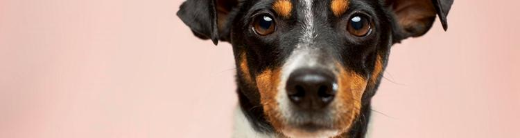 Skal hundepasning være din levevej?