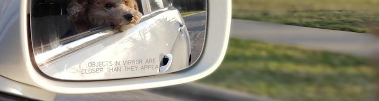 Gode grunde til at få repareret revnen i bilruden
