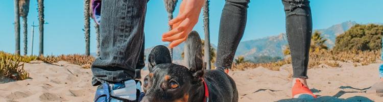 Sådan får du mere overskud til din søde hund