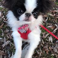 Aslan himmelhund