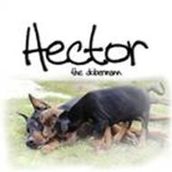 • Hector •