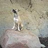 Bella sportshund