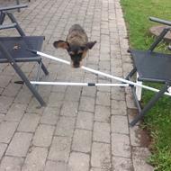 Gravhunden <3