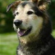 Snuden - Gør Mentaltest af alle hunde til lov