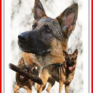 Sanne M, Kradsebørsten og hundehvalpens moar