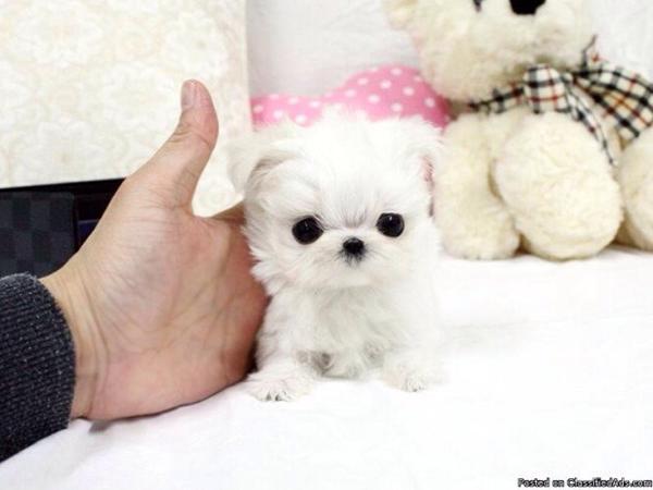 små hunde