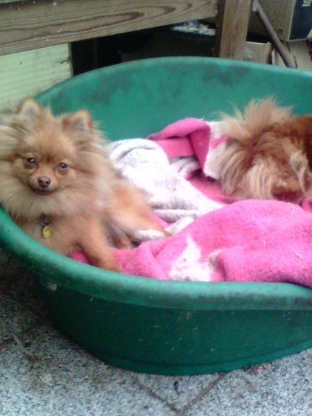 nytårs pasning af hund tilbydes.....helst ikke for store hunde.... g.d. broholmer irsk ulvehund......