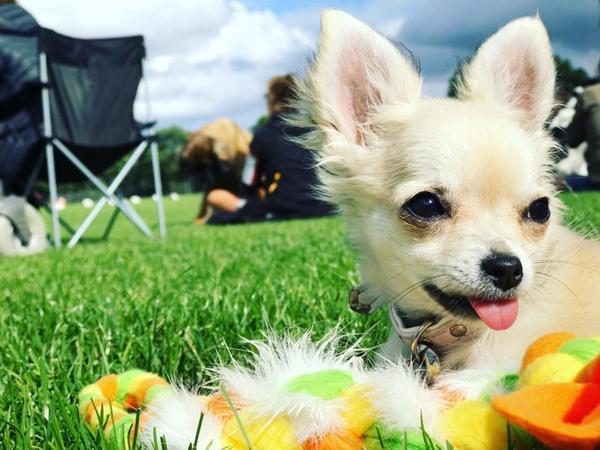 Fornuftigt overtøj til meget lille hund