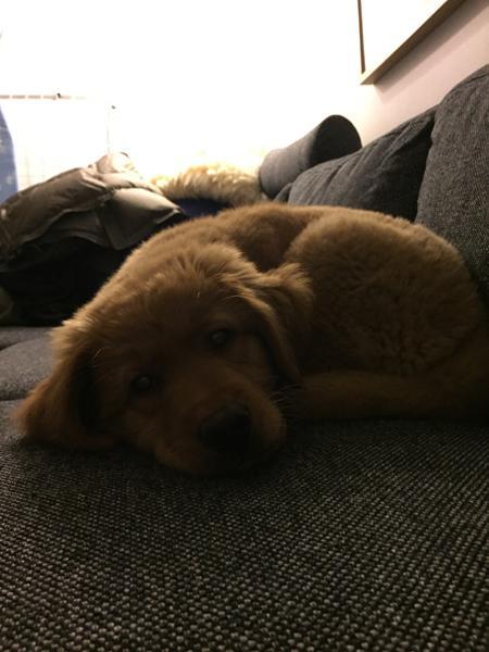 Må jeres hund være i sofaen?