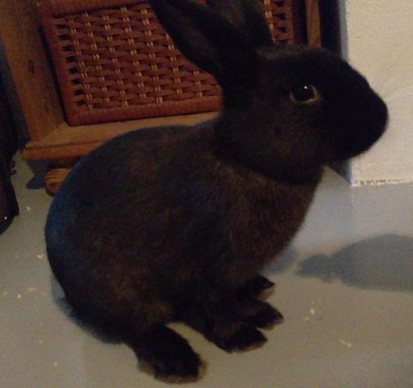 Hvilken race er kaninen? :)