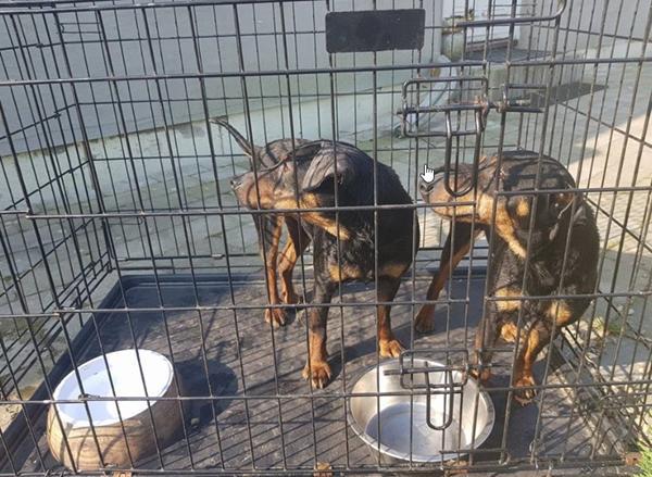 Fremlysning af 2 hunde - what to do?