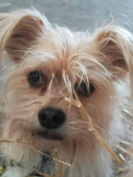 Hund med i stalden