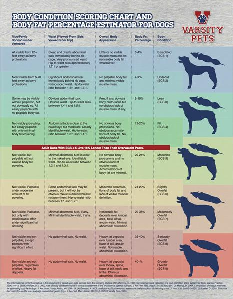 Hvornår er en hund Egentlig for tynd?