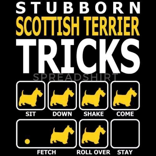 Derfor har jeg Skotsk Terrier