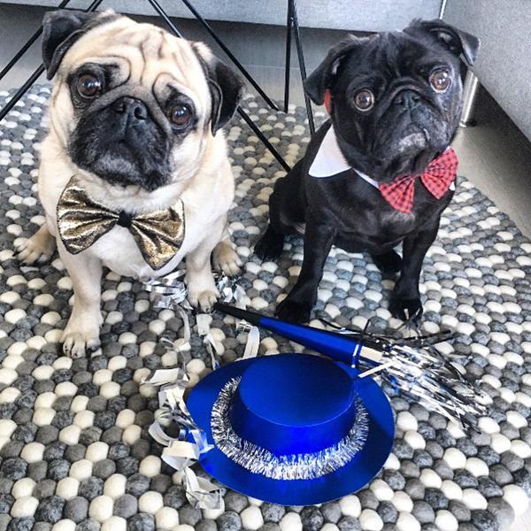 Happy dog - nytår på hotel