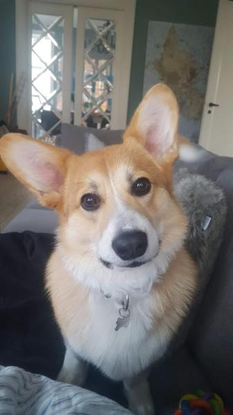 Ny hund til MIIIG