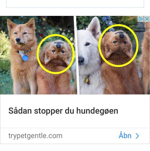 Stop hundegøen annonce