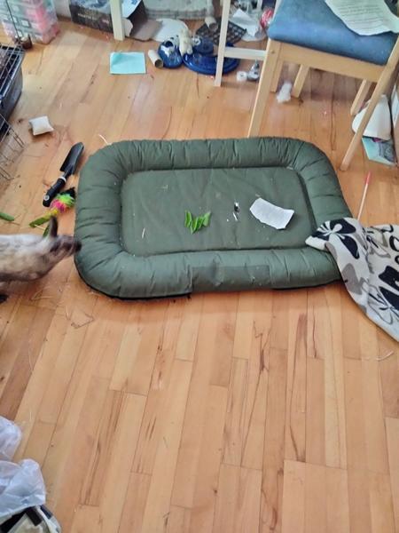 Søger sted at købe denne hundekurv
