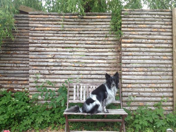 Fremragende Hegn Til Hunde ZN46 | Congregationshiratshalom NB22